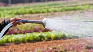 innaffiare orti acqua