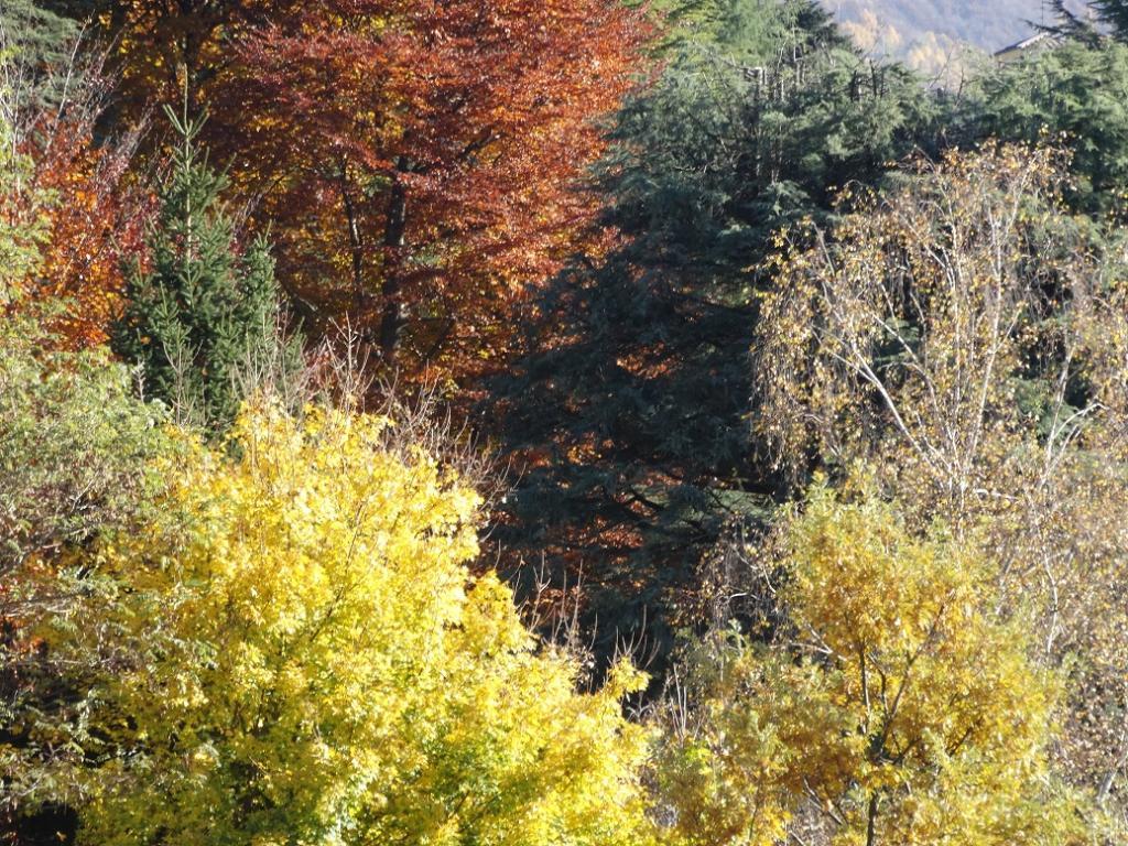 2015-10-30 foto autunno (2)r