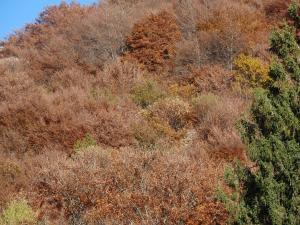 2015-10-30 foto autunno (3)r