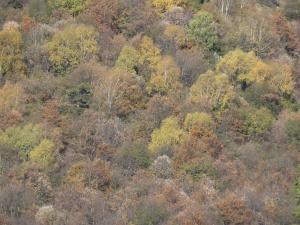 2015-10-30 foto autunno (4)r