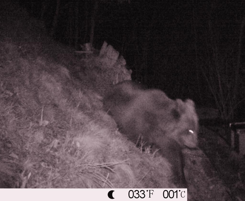"""M7, l'orso """"premanese"""" dell'aprile 2013"""