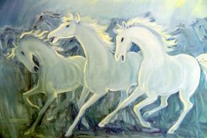 cavalli SANCINA