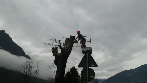 pc-bindo-taglio-alberi-cortenova-4