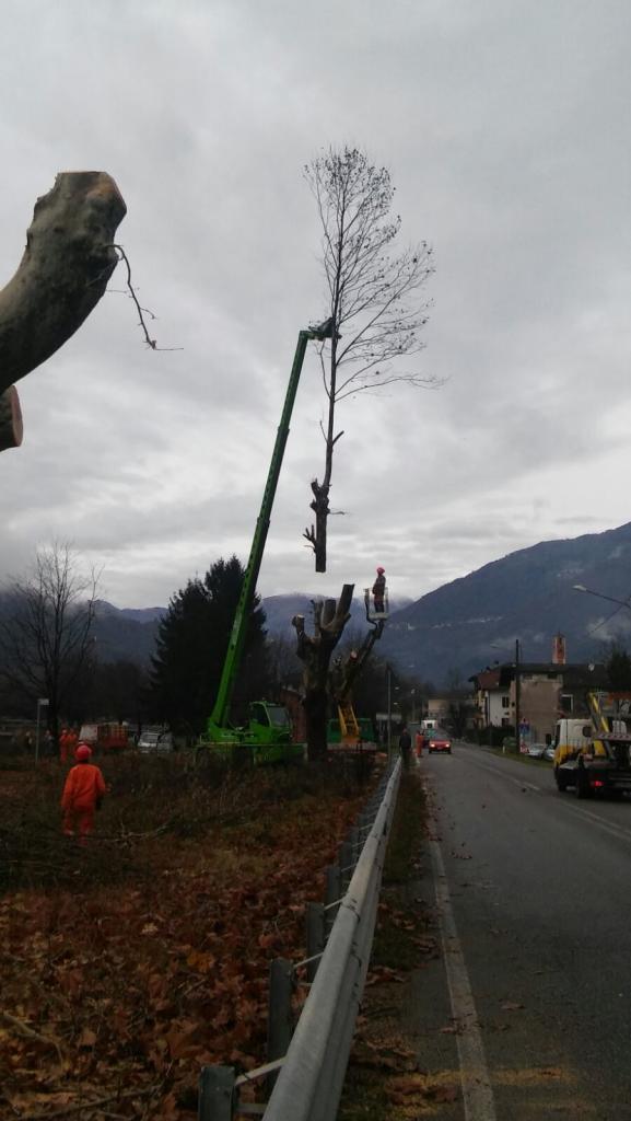 pc-bindo-taglio-alberi-cortenova-8