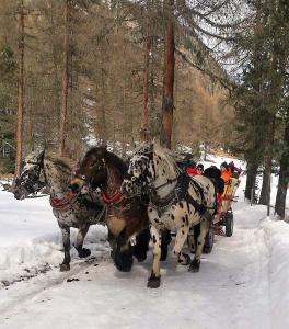 cavalli domenicale