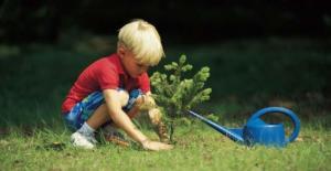 piantare alberi