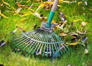 pulizia verde rastrello