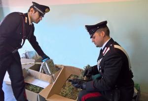 foto arresto Colico VENDROGNO droga marijuana - Copia
