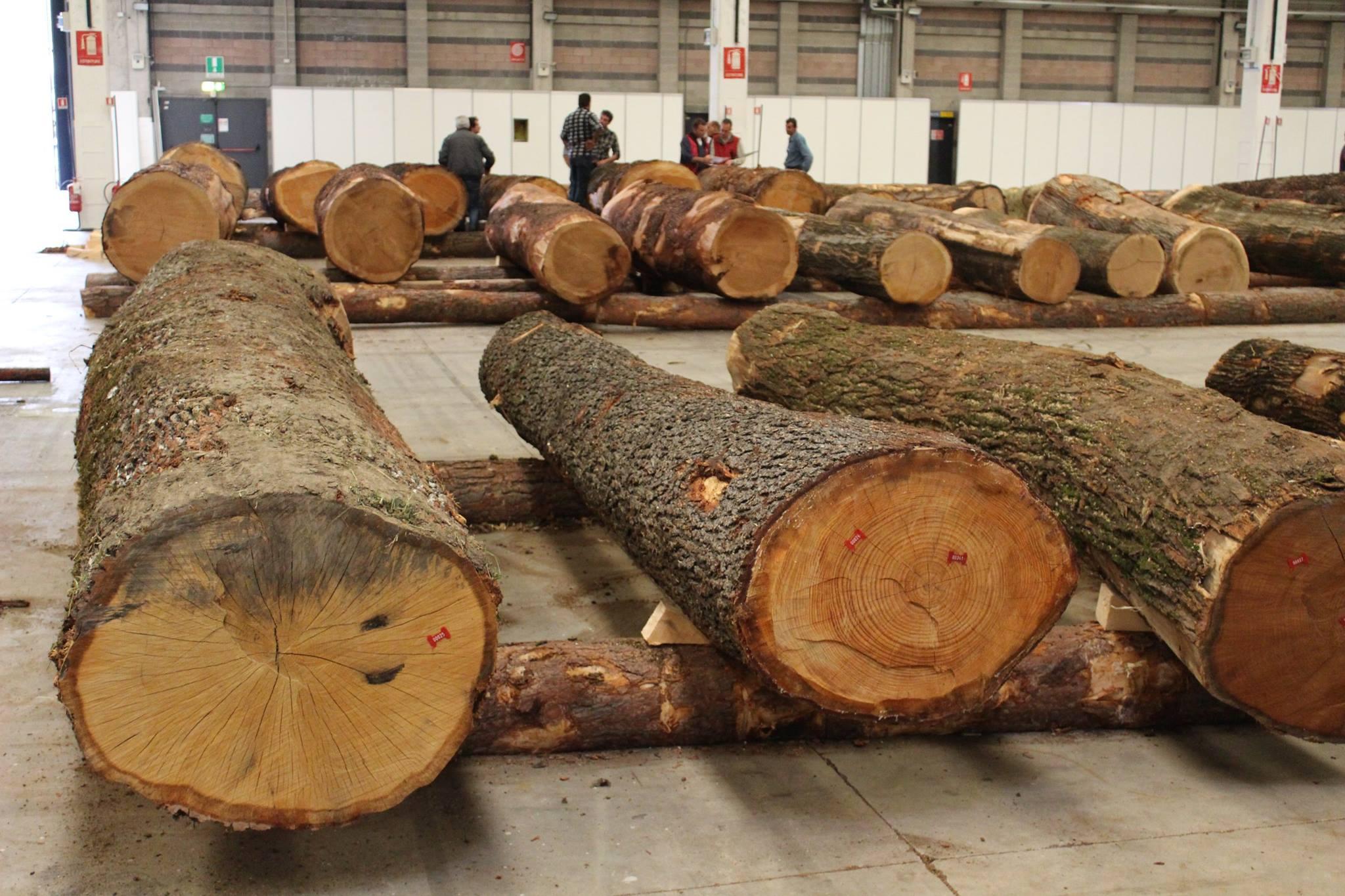 Vivaio Forestale Curno : Rapporto sullo stato delle foreste: labbandono gestionale si
