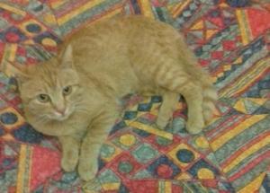 frugolo gatto (1)