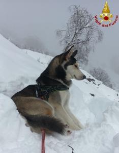Hurley cane husky - vigili del fuoco pompieri (1)