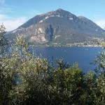 Olivicoltori-del-Lago-di-Como-3