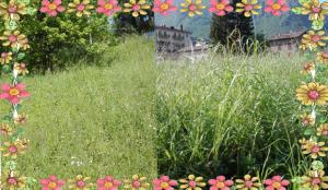 fiori ballabio
